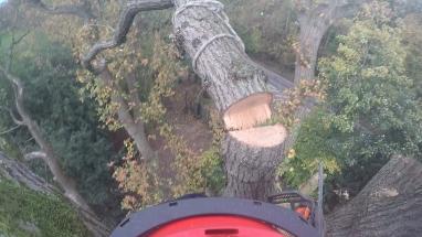 treesurgeon