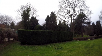 Hedge Work Chester